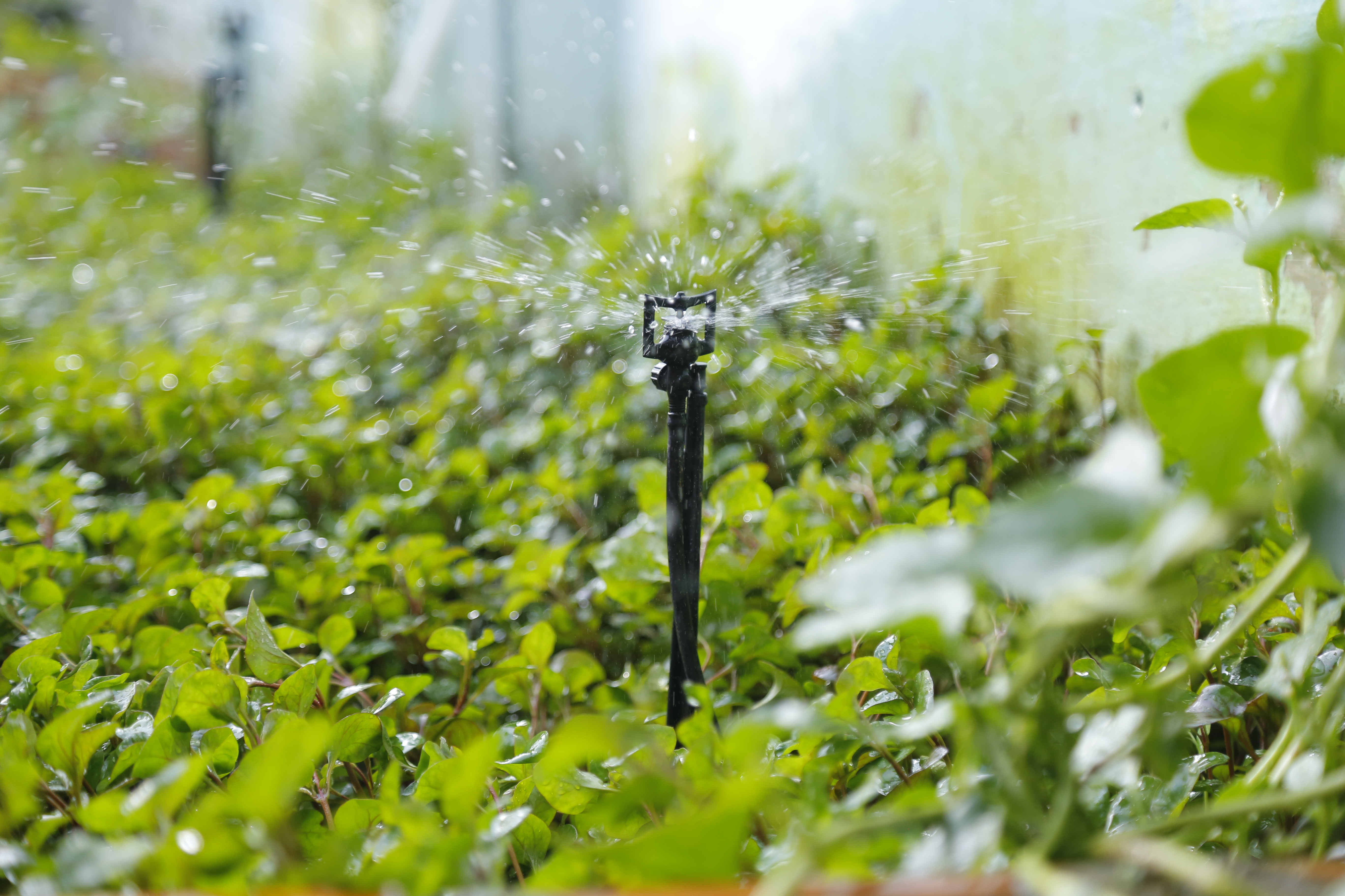 Béc tưới phun mưa BS5000