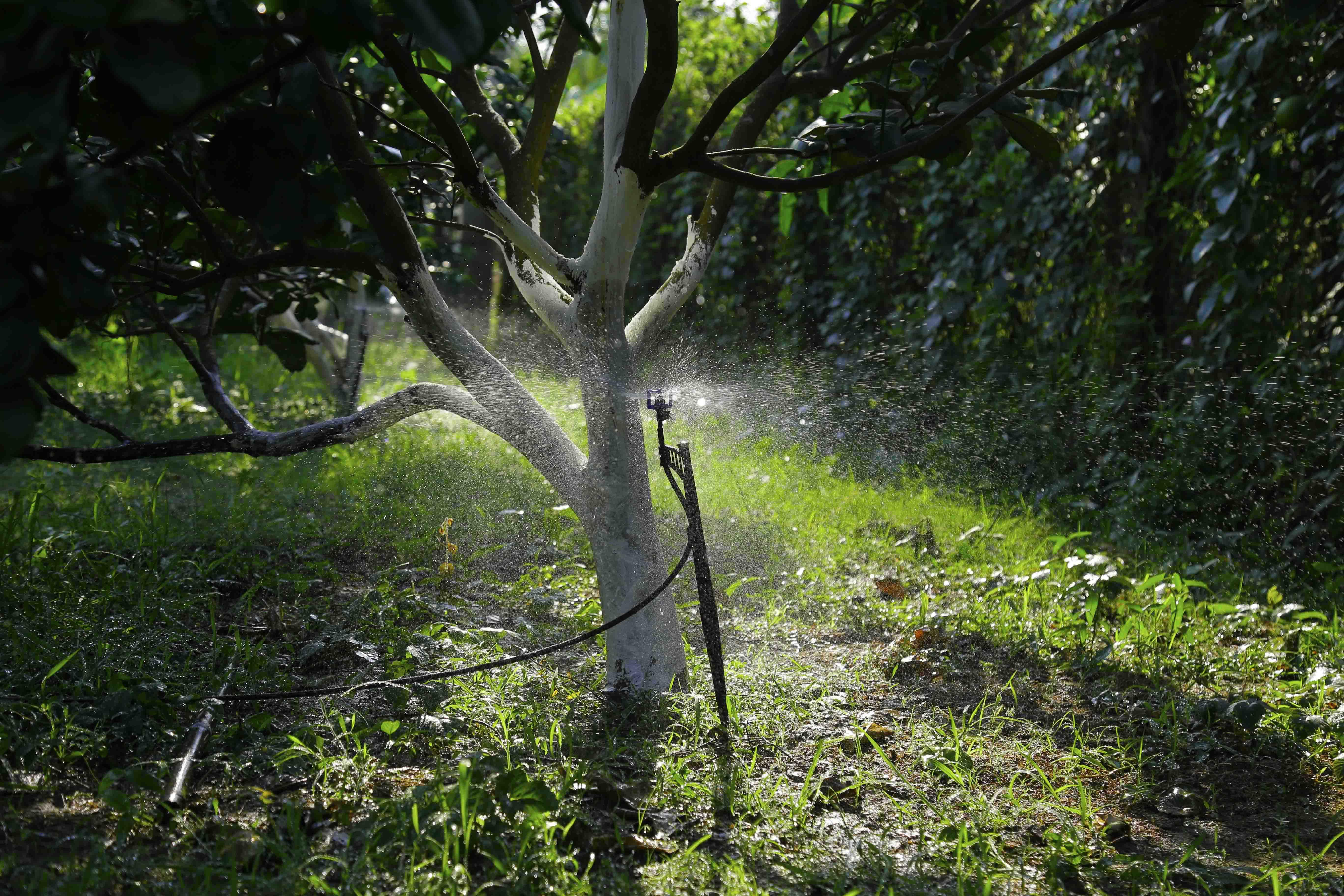 Béc tưới phun mưa BS5000 cho hạt rất đều và mịn từ trong ra ngoài