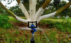 béc tưới phun mưa cho cây sầu riêng