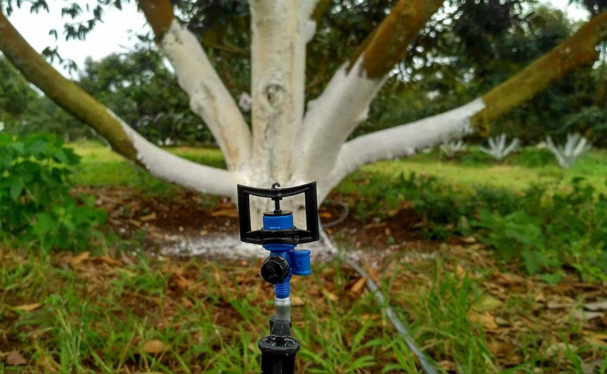 Kỹ thuật chăm sóc cây sầu riêng - Hệ thống tưới sử dụng béc BS5000 tại Tây Nguyên