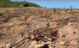 Kỹ thuật chăm sóc cây quýt - Hệ thống tưới đồi dốc bằng béc BS5000 Plus