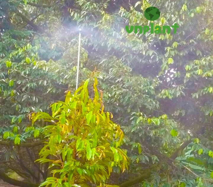 Béc phun xịt thuốc tự động cho hạt sương đều và mịn từ trong ra ngoài
