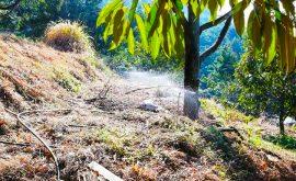 béc bs5000 pro tưới sầu riêng đất đồi dốc tại KonTum 1