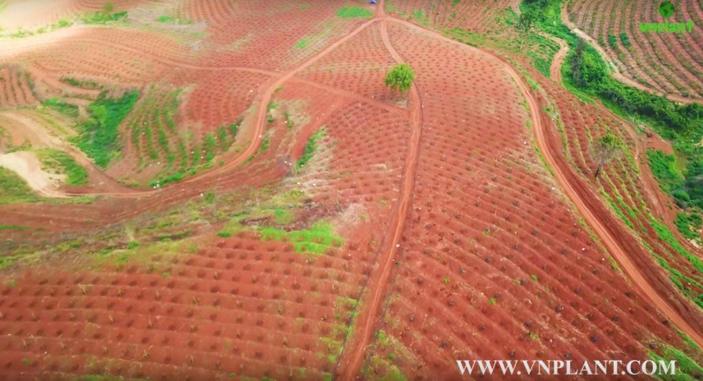 béc bs5000 pro tưới sầu riêng đất đồi dốc tại KonTum